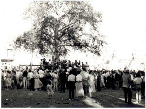 Suntree1950